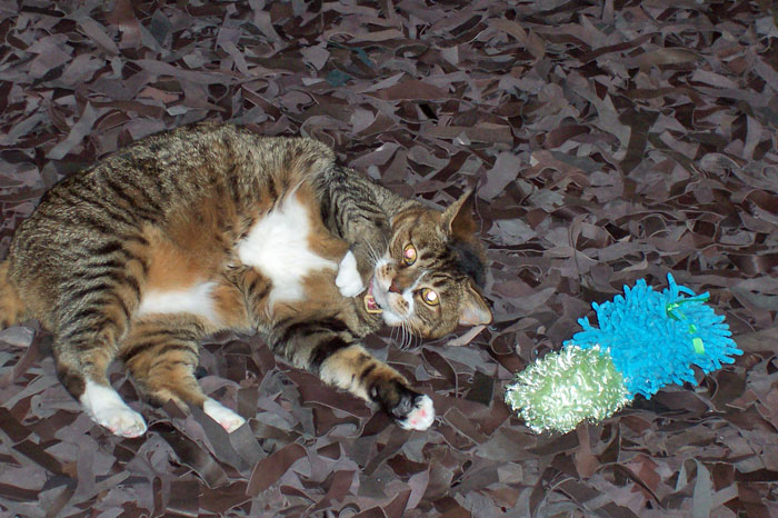 14 Years of Kitty-mon - 1