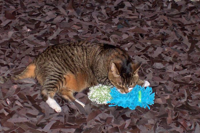 14 Years of Kitty-mon - 2