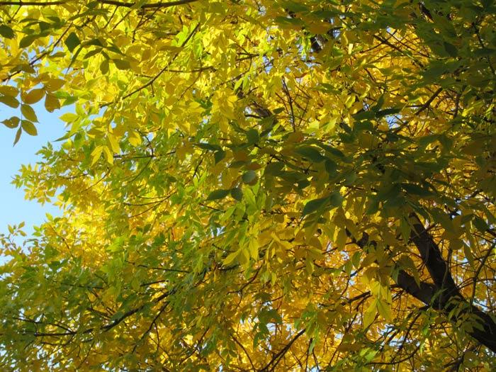 Fall 2012 Leaves - 1