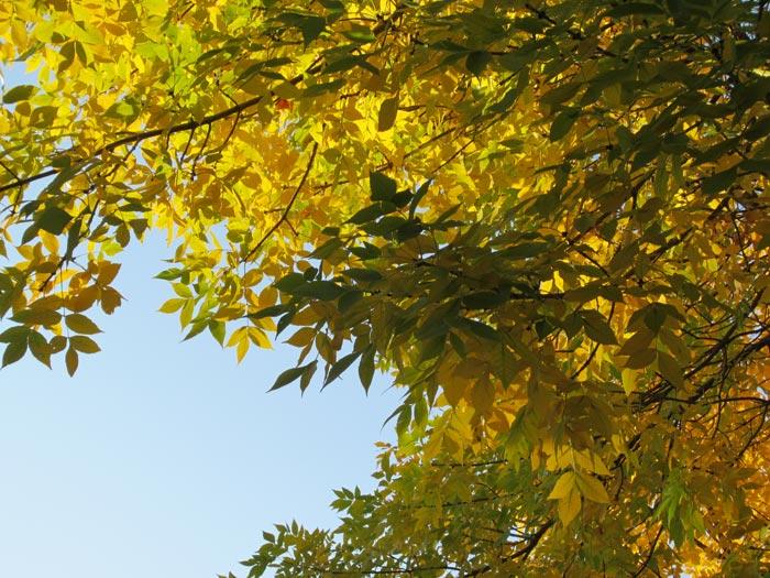 Fall 2012 Leaves - 2