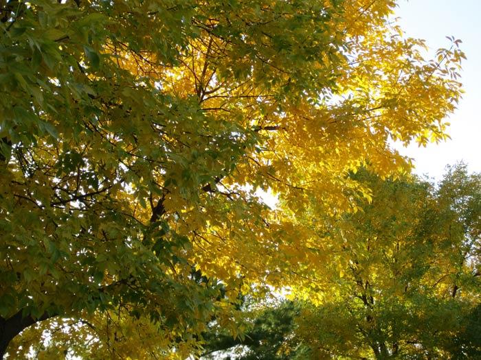 Fall 2012 Leaves - 3