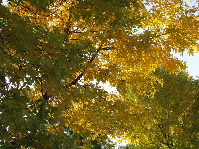 Fall 2012 Leaves - 4
