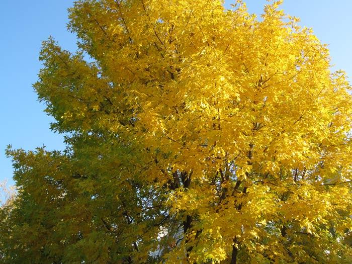 Fall 2012 Leaves - 5