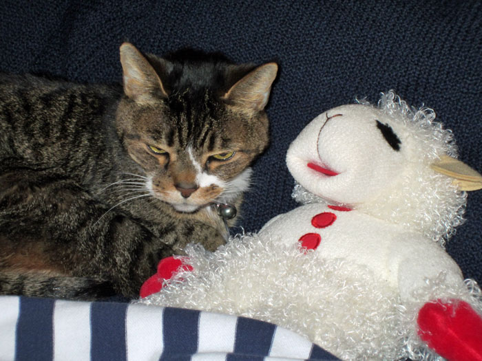 Kitty-mon & Lamb Chop - 1