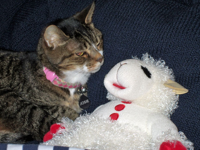 Kitty-mon & Lamb Chop - 2