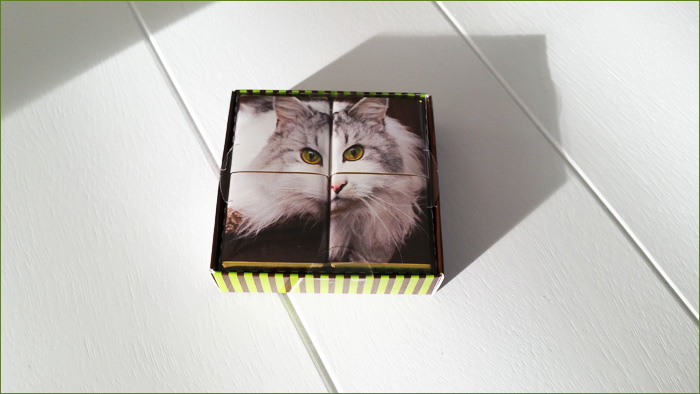 Cat Sweets!