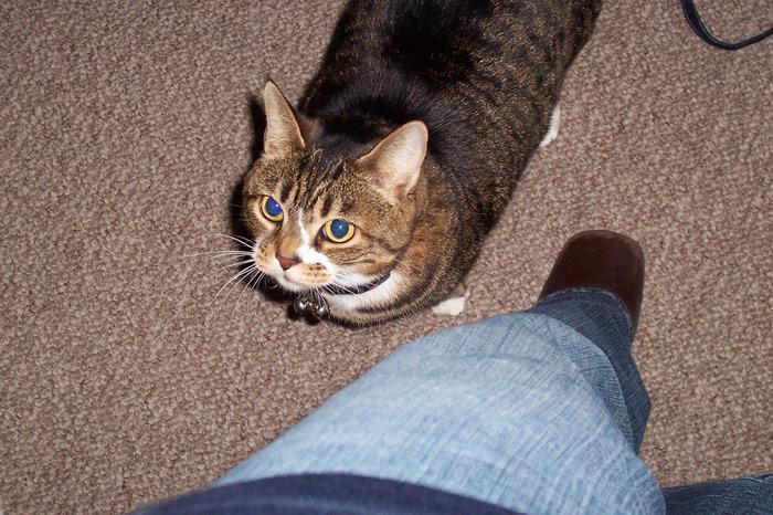 Josie, At Attention! - March 15, 2005