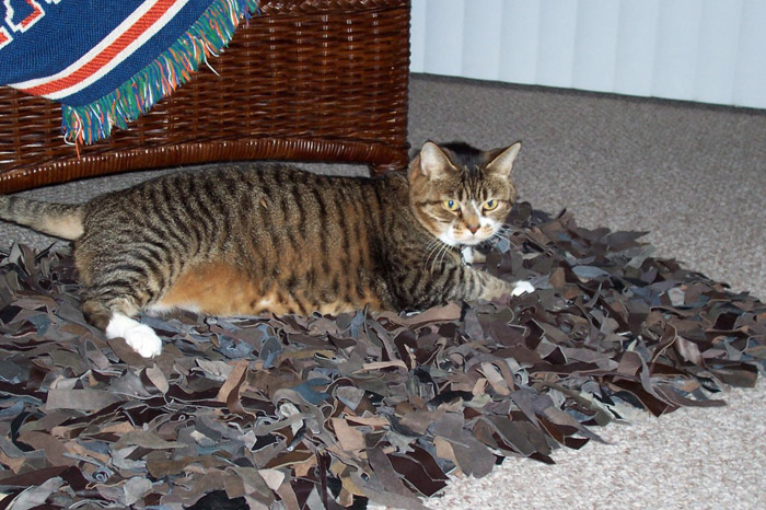 Kitty-mon and the leather rug.