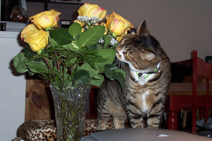 Kitty-mon and the Secondhand Roses - 1