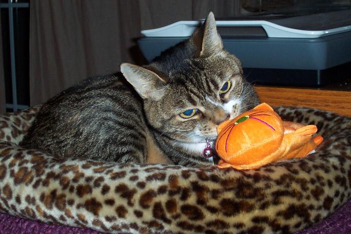 Josie and the Orange Cat - Feb. 28, 2011