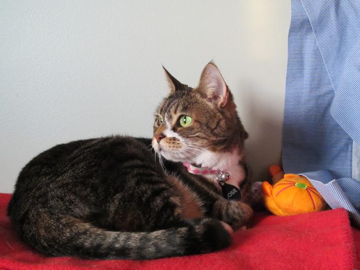 Pensive Josie - April 21, 2012